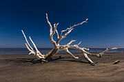 Beach Scenes Photos - White Tree by Debra and Dave Vanderlaan