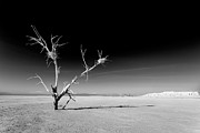 Dry Lake Art - White Tree by Peter Tellone