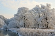 Frost Mixed Media - White trees by the river by Gynt