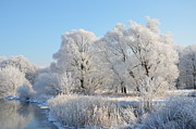 Frost Mixed Media - White trees by Gynt