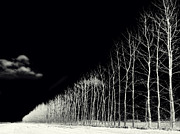 Winter Night Prints - White Trees Print by Stylianos Kleanthous