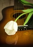 Music. Love Framed Prints - White Tulip flower and guitar Framed Print by Edward Fielding