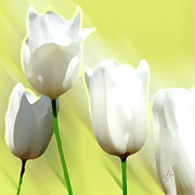 Stylized Digital Art Prints - White Tulips Print by Ben and Raisa Gertsberg