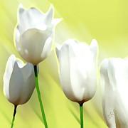 White Tulips Print by Ben and Raisa Gertsberg
