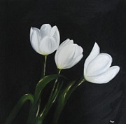 White Blossoms Paintings - White tulips on Black by Maureen Hargrove