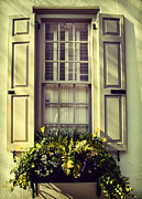 Window Box Prints - White Window Box Print by Iris Greenwell
