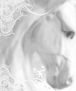 Subtle Originals - White Winter Horse 2 by Tony Rubino