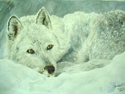 Kristina Delossantos - White Wolf In The Snow