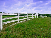 Ranch Framed Prints - White Wood Fence Framed Print by Olivier Le Queinec
