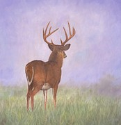 Whitetail Deer Posters - Whitetail Poster by David Stribbling
