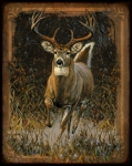 Running Metal Prints - Whitetail Deer Metal Print by JQ Licensing