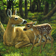 Crista Forest - Whitetail Deer - First Spring - Square