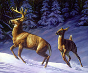 Crista Forest - Whitetail Deer Painting - Startled