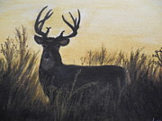 Tammy McClung - Whitetail deer