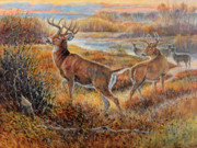 Whitetail Deer Painting Framed Prints - Whitetail Sunrise Framed Print by Steve Spencer