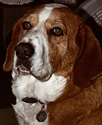 Basset Hound Photos - Who Could Ask For More by Don Wright