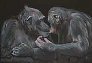 Primate Drawings - Who gives a fig? by Jill Parry