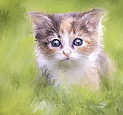 Cute Kitten Prints - Who I am and Who you are Print by Yury Malkov