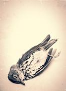 Who Killed Cock Robin Print by Edward Fielding