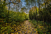 Kettle Moraine Prints - Who Needs a Yellow Brick Road Print by Randy Scherkenbach