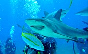 Humorous Greeting Cards Photo Metal Prints - Who Said Sharks Were Mean Metal Print by John Malone