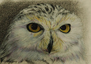 Owl Pastels Framed Prints - Who Sees Who III Framed Print by Linda Harrison-parsons