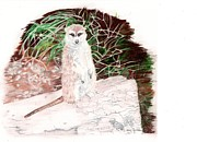 Meerkat Drawings - Who You Lookin At? by Linda Ginn