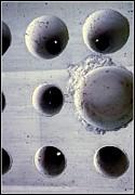 Marlene Burns - Wholly Holes 4