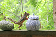 Squirrel Prints Photo Prints - Whos Been in the Cookie Jar? Print by Peggy Collins