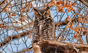 Owl Metal Prints - Whos There Metal Print by Cat Connor