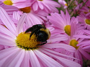 Teresa Cox - Why bees can carry pollen