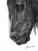 Horse Sketch Framed Prints - Wide Eyed Wanderer Framed Print by J Ferwerda