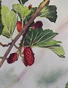 Deane Locke - Wide Mulberries