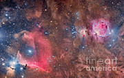 Molecular Clouds Prints - Widefield View Of Orion Nebula Print by Roberto Colombari