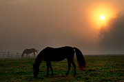 Horse Stable Digital Art Posters - Widener Horse Farm at Sunrise Poster by Bill Cannon