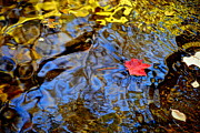 Nature Picture Posters - Wiggling Water Poster by Robert Harmon