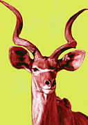 Wild Animal Mixed Media Posters - Wild Animal Stylised Pop Art Drawing Potrait Poser Poster by Kim Wang