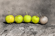 Raw Originals - Wild apples on a stone by Tommy Hammarsten