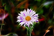 Flowers - Wild Aster by Shane Bechler