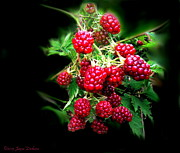 Joyce Dickens Digital Art Posters - Wild Blackberries 2 Poster by Joyce Dickens