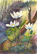 Forest Floor Painting Posters - Wild Bloodroot  Poster by Madelaine Alter
