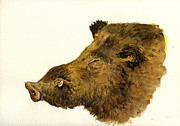 Wild Boar Paintings - Wild boar head study by Juan  Bosco