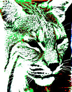 Bobcat Art Prints - Wild Bobcat Print by Mark Moore