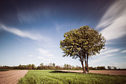 Green Field Prints - Wild Cherry tree Print by Davorin Mance
