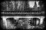Spencer McDonald - Wild Creek
