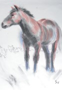 Atmospheric Drawings Prints - Wild Dartmoor Horse Print by Mike Jory