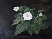 Datura Painting Prints - Wild Desert Flower Print by Kay Susin