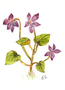 Tis Art Art - Wild Dog Violet by Tis Art