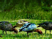 Carl Rolfe Art - Wild Ducks by Carl Rolfe