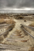 Dunes Prints - Wild Dunes Beach South Carolina Print by Dustin K Ryan
